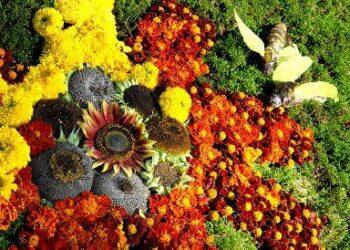 Floristiniuose kilimuose – įvairiaspalvės gamtos gėrybės. Jono JUNEVIČIAUS nuotr.