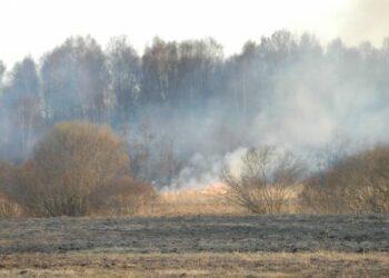 Šiemet jau užregistruoti 4853 miškų gaisrai, jų metu išdegė per 9,7 tūkst. ha atvirų teritorijų ploto.