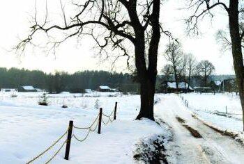 Keliukas,vedąs link tuštėjančių Bliuvonių kaimo sodybų, tykiai sutūpusių pamiškėje.