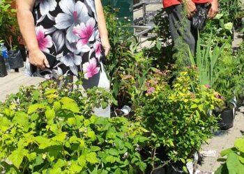 Gėlininkai iš Plungės rajono atpigina verslo sąnaudas nakvodami automobilyje.
